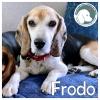 Frodo *