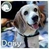 Daisy *