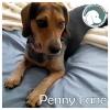Penny Lane *
