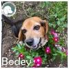Bodey *
