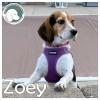 Zoey *