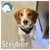 Stryker *