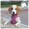 Mercy *
