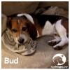 Bud *