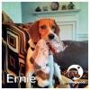 Ernie II