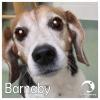 Barnaby *