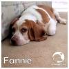 Fannie *