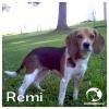Remi *