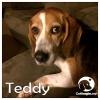 Teddy *