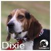 Dixie *