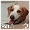 Ritter *