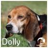 Dolly *