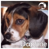 Daphne *