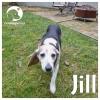 Jill *