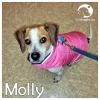 Molly *