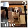 Tillie*
