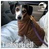 Tinkerbell *