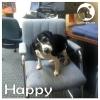Happy *