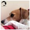 Pete *