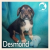 Desmond *
