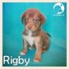Rigby *