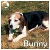 Bunny *