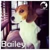 Bailey *