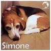 Simone *