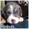 Reeses *