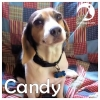 Candy *