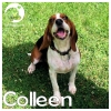 Colleen *