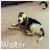 Walter *