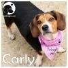 Carlita (Carly) *