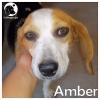Amber *
