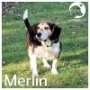 Merlin*