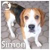 Simon *