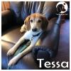 Tessa *