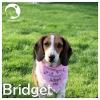 Bridget *
