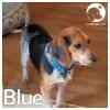 Blue *