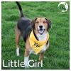 Little Girl *