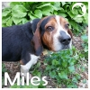 Miles *