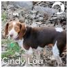 Cindy Lou *