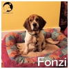 Fonzi *