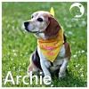 Archie *