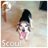 Scout *