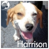 Harrison *
