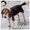 Baylee *