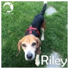 Riley *
