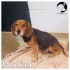 Madison *