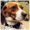 Sheila *